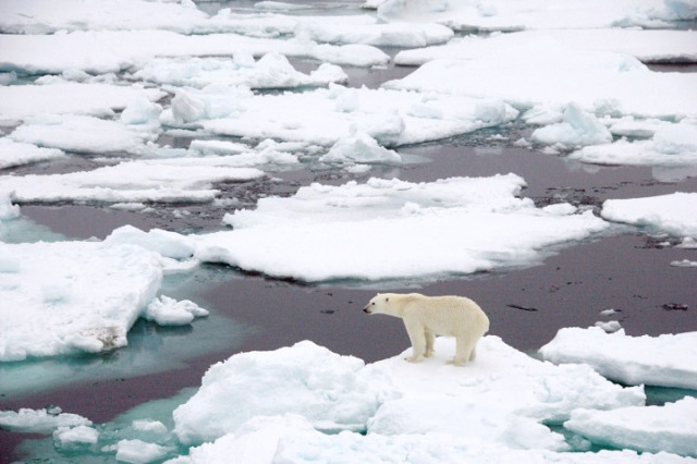 It also bothers the polar bears, who are notoriously picky  about the location and thickness their ice (photo credit: nasa.gov)